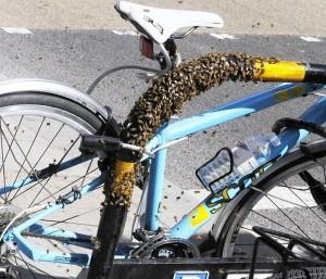 Кража велосипеда: что нужно делать?